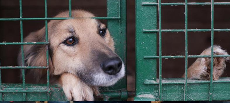 Aprovado projeto de Chiabai que estabelece ações contra abandono de animais