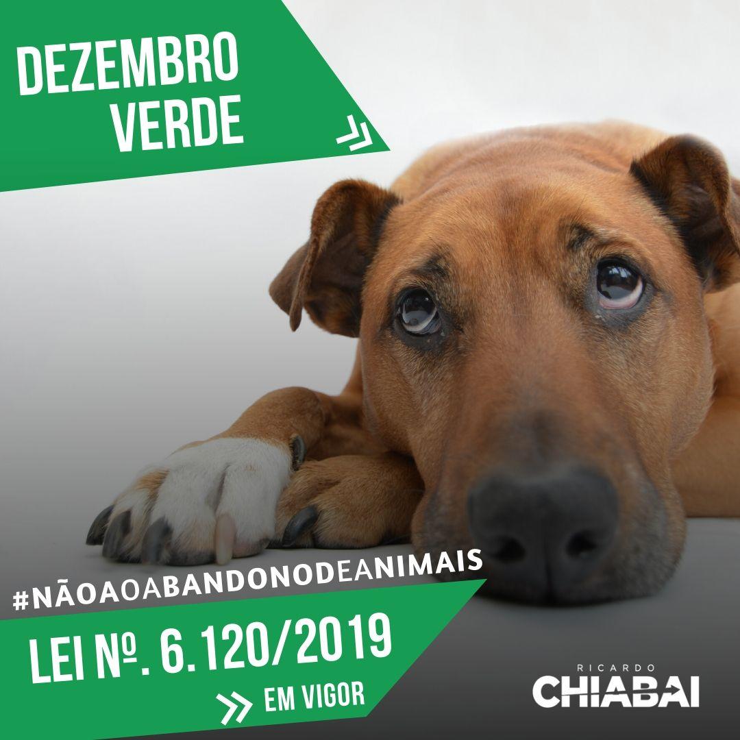 LEI nº 6.120/2019 - DEZEMBRO VERDE